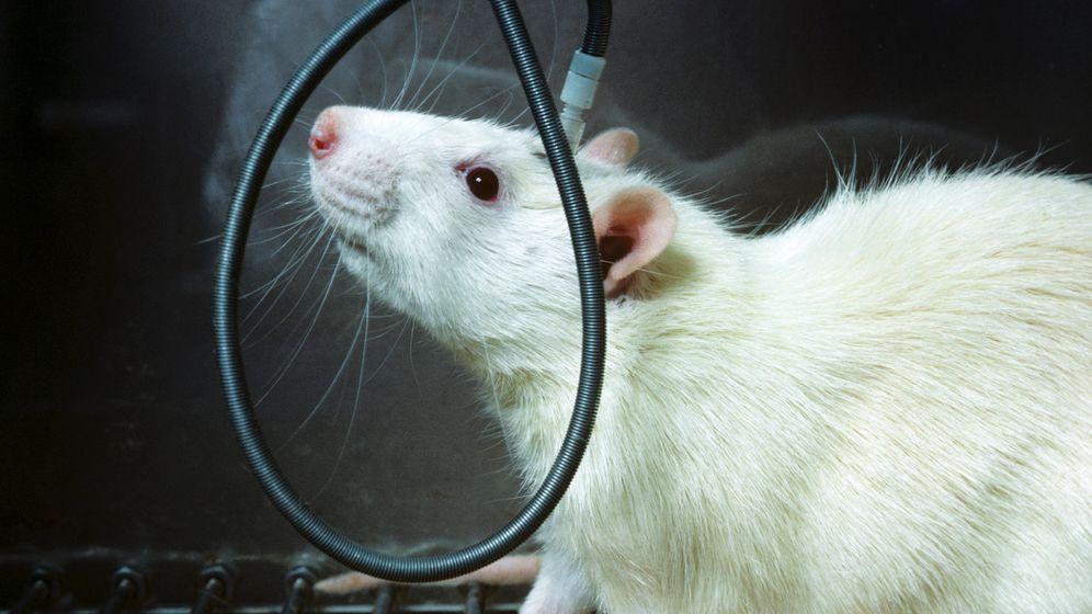 """Brain Chips""-Experimente: Science-Fiction im Kopf"