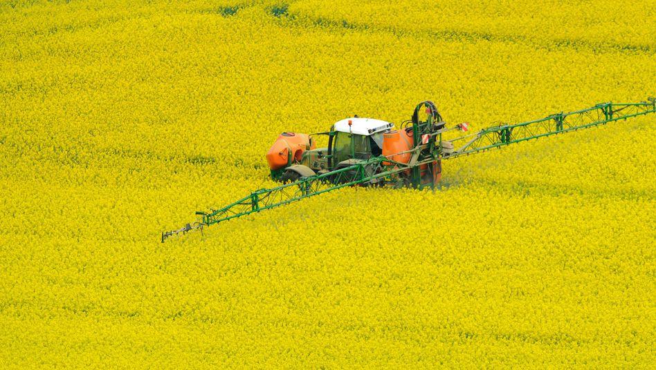 Pestizideinsatz auf Rapsfeld: Industrie verhindert strenge Regulierung