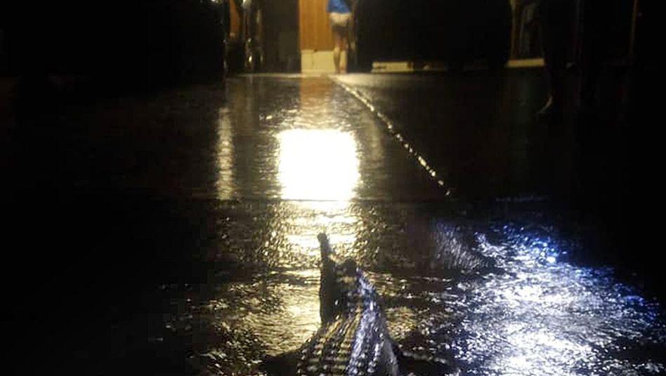 Aufnahme zeigt ein Krokodil vor einem Haus in Townsville