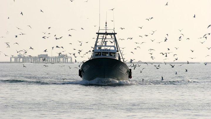 Seevögel: Beifang als Fastfood