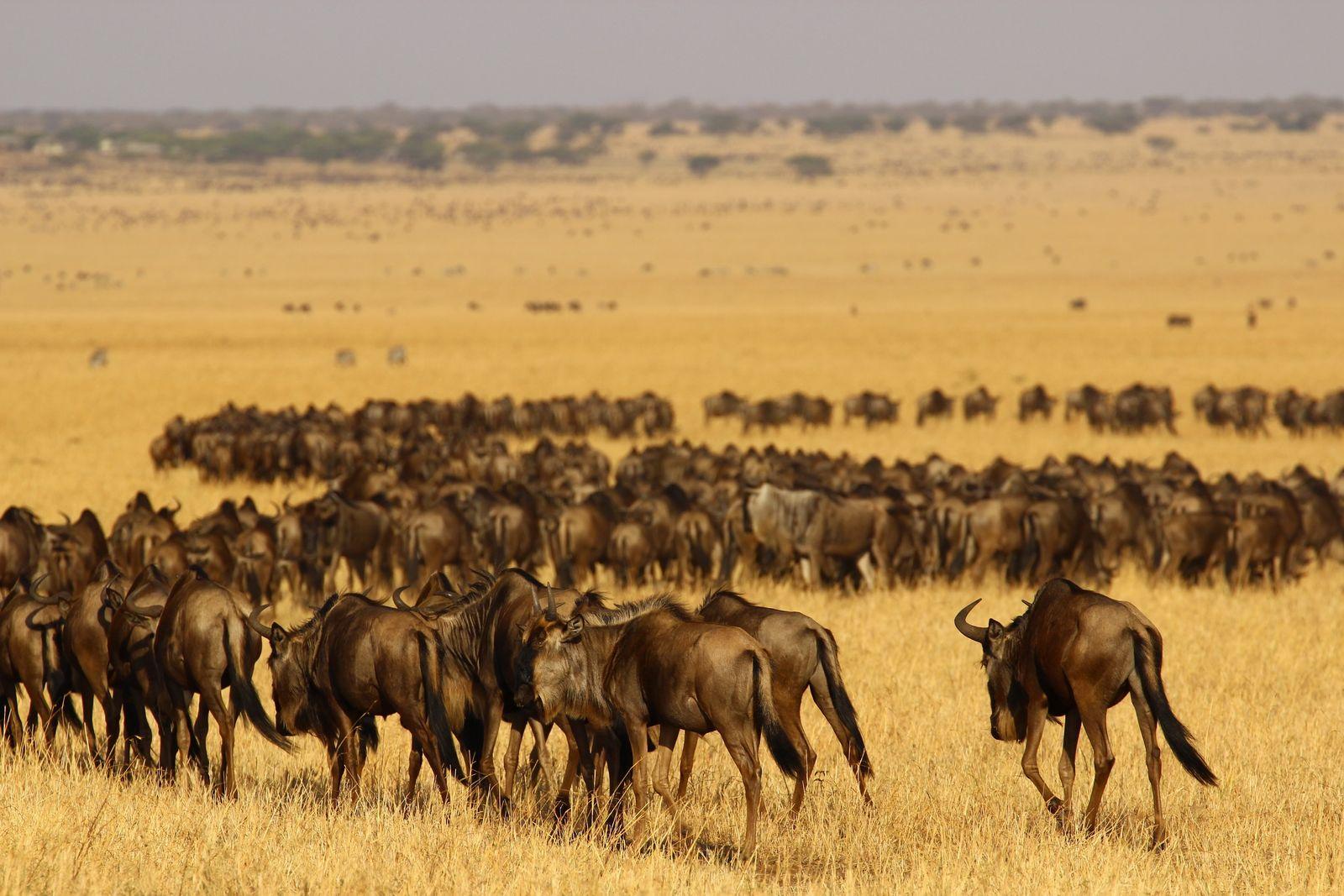 EINMALIGE VERWENDUNG Serengeti