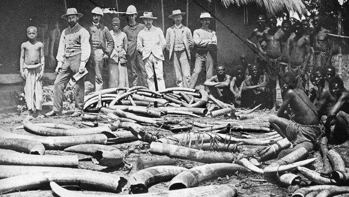 Kolonie Kongo: Quelle von Elfenbein und Sklaven