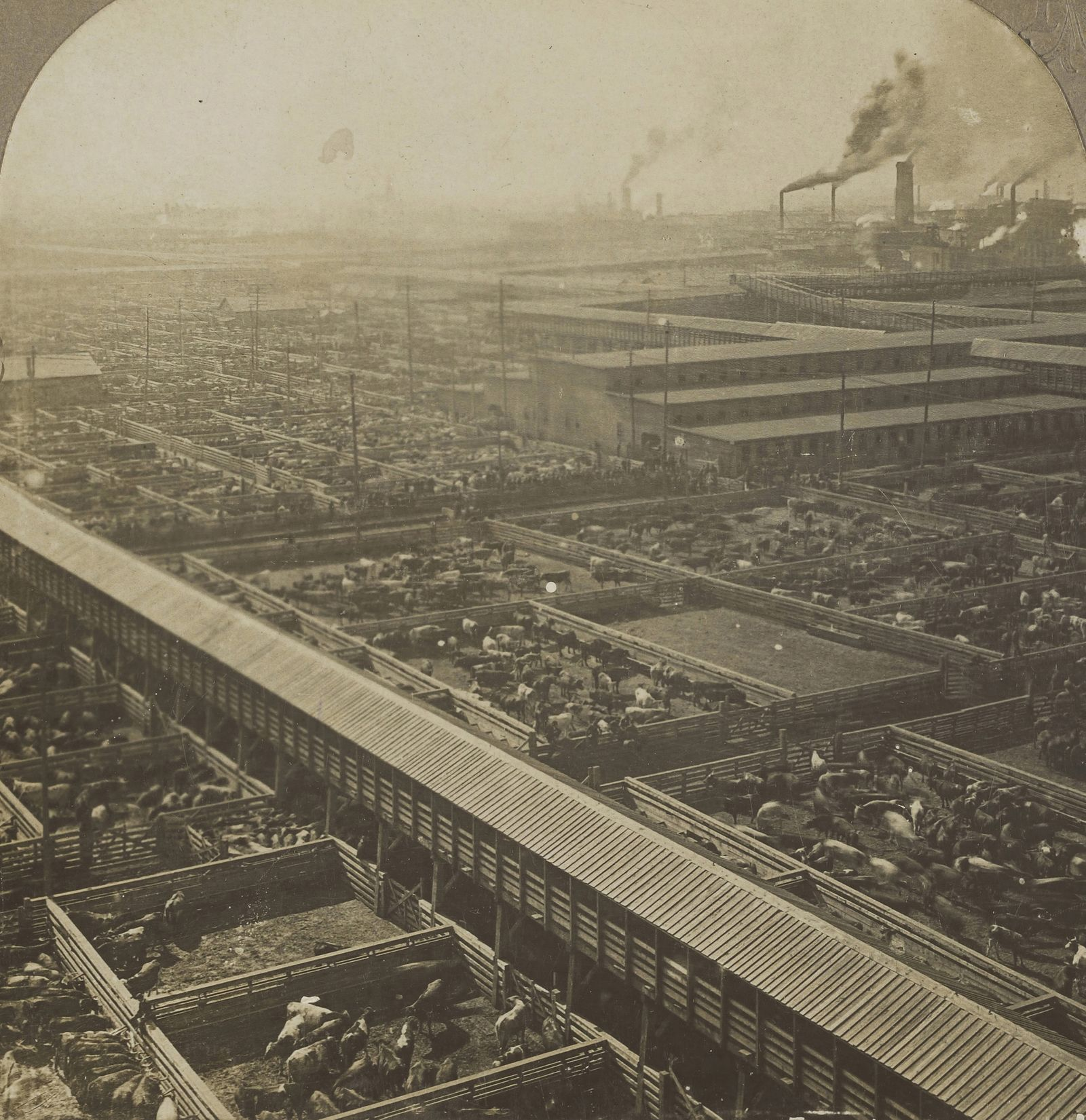 Bird's Eye View of the Great Union Stock yards. Chicago.