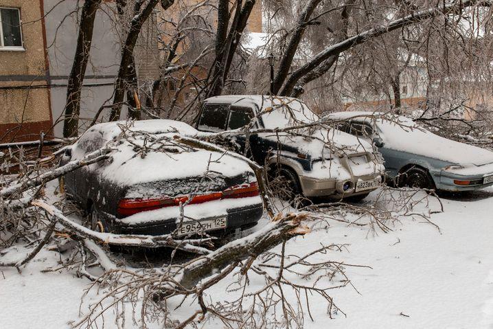 Wladiwostok in Russland: Dicke Schneeschicht auf Bäumen und Autos