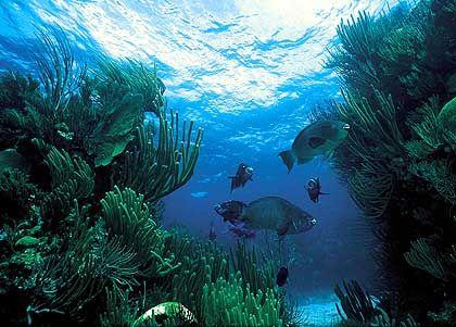 Aber wenn man die Riffe hinabtaucht, entdeckt man nicht nur bunte Korallen ...