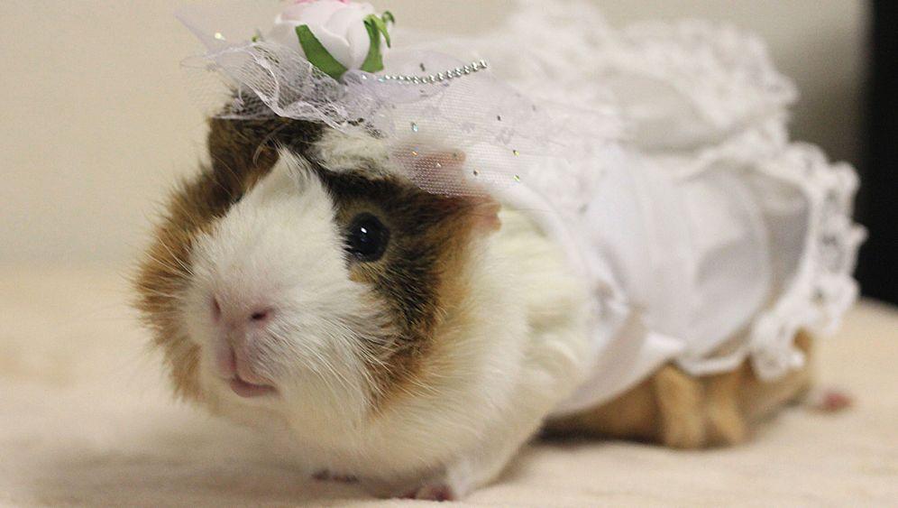 Tiermode: Schrecklich-schöne Schweinchen