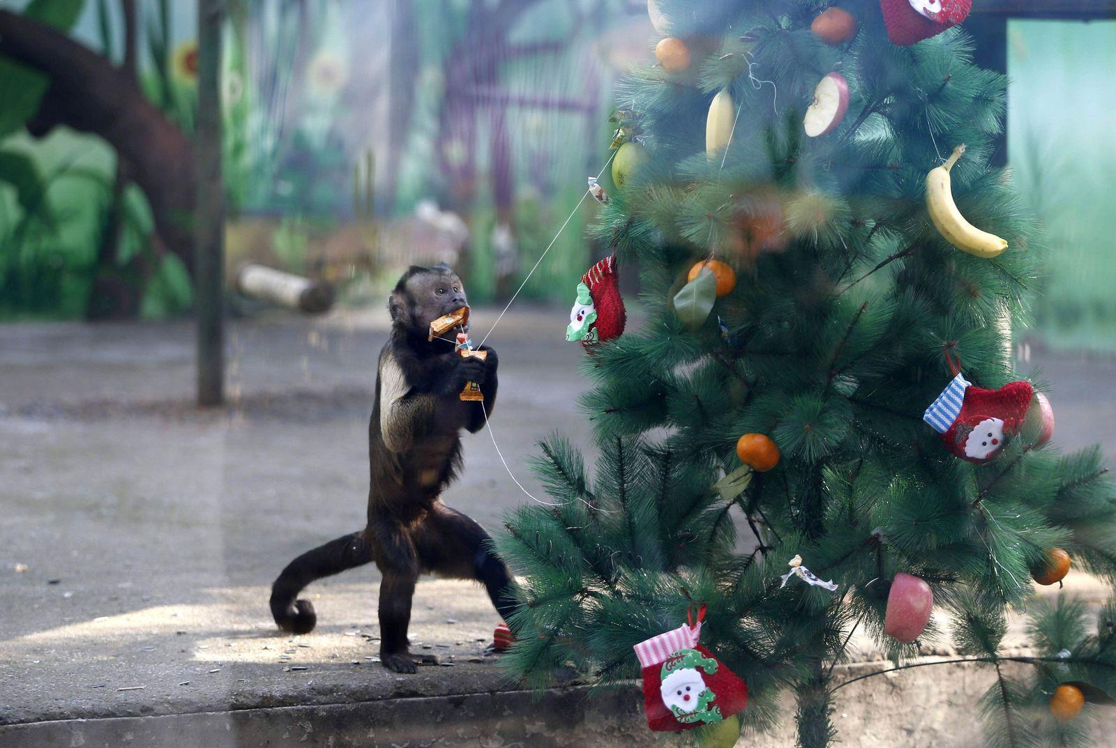 Zoo Weihnachten