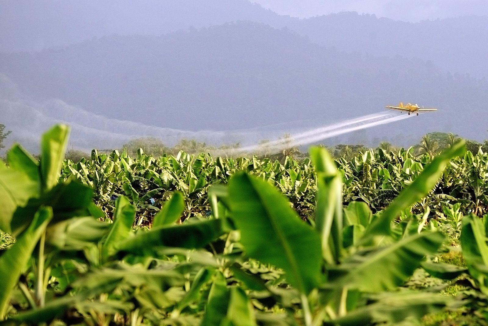 NICHT VERWENDEN SYMBOLBILD Pestizide/ Costa Rica