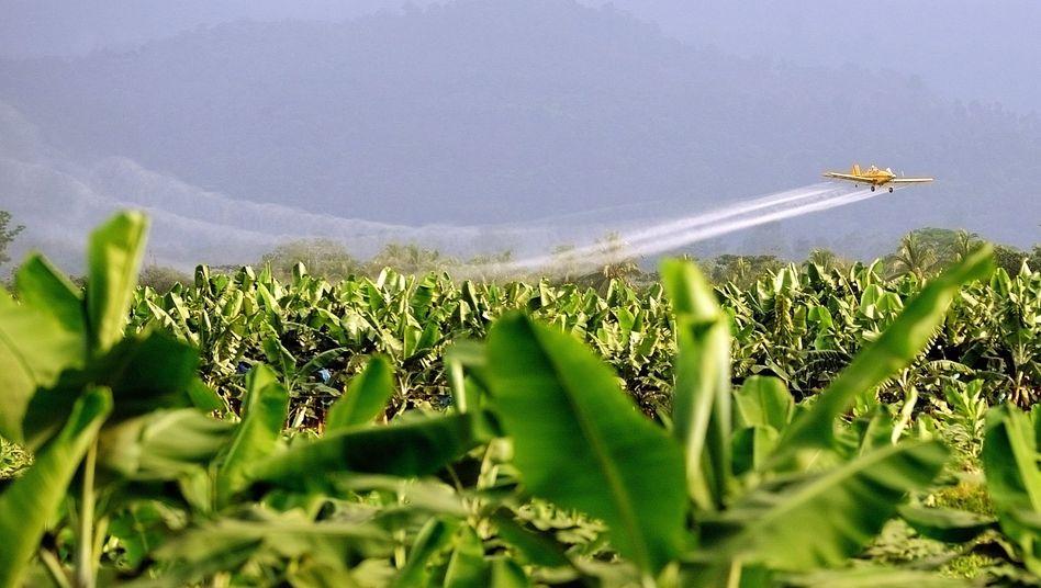 Pestizide werden verteilt: Studie warnt vor verbreitetem Mittel