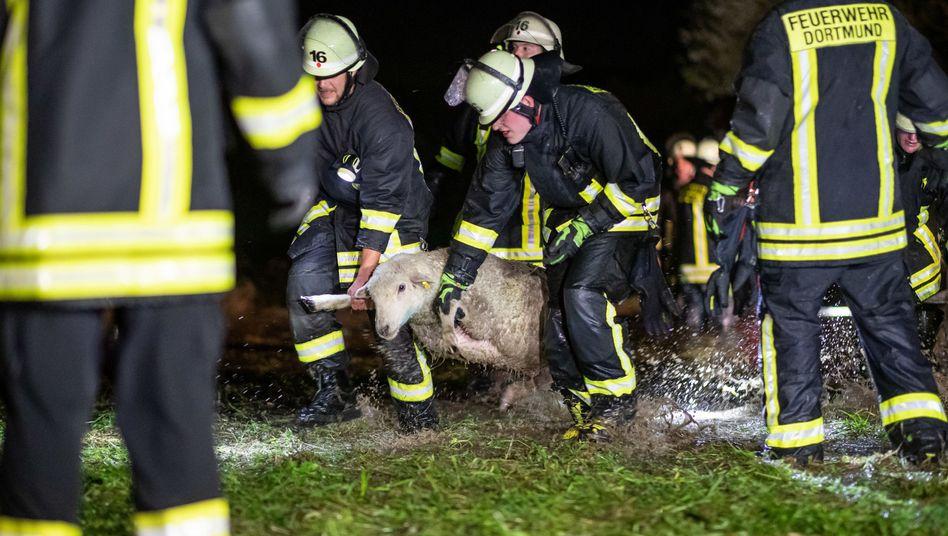 Einsatzkräfte der Feuerwehr tragen ein Schaf über eine überflutete Wiese
