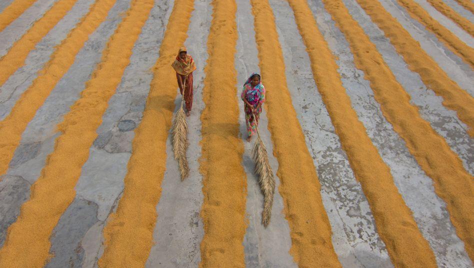 Arbeiterinnen beim Reistrocknen in Bangladesch
