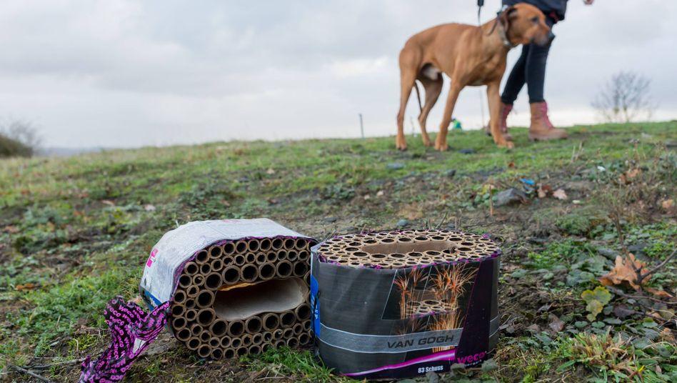 Hund bei Spaziergang an Neujahr: Was wollen wir unseren Tieren zumuten?
