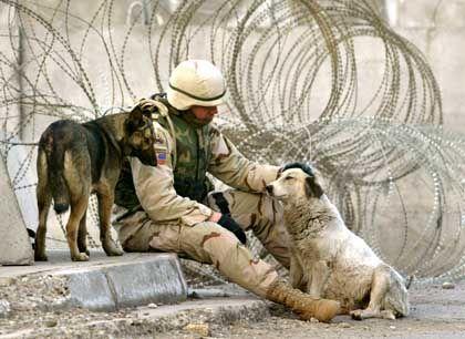 US-Soldat mit Hunden am Straßenrand: Die Vierbeiner sind im Irak oft die einzigen Lebewesen, denen die GIs vertrauen