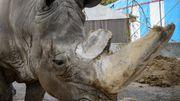 Zirkus-Nashorn Tsavo ist tot