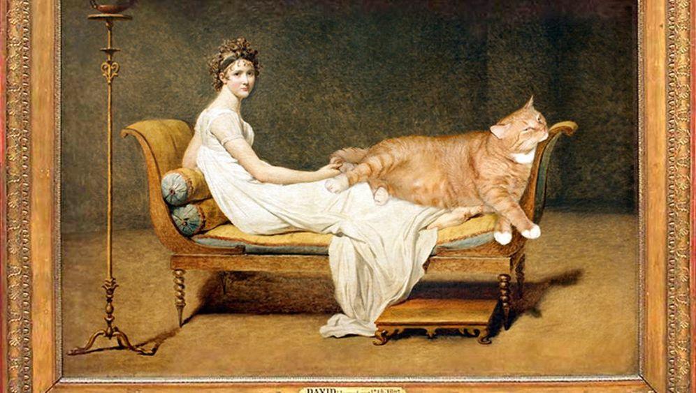 Russische Katzenkomik: Dicker Kater, gute Witze