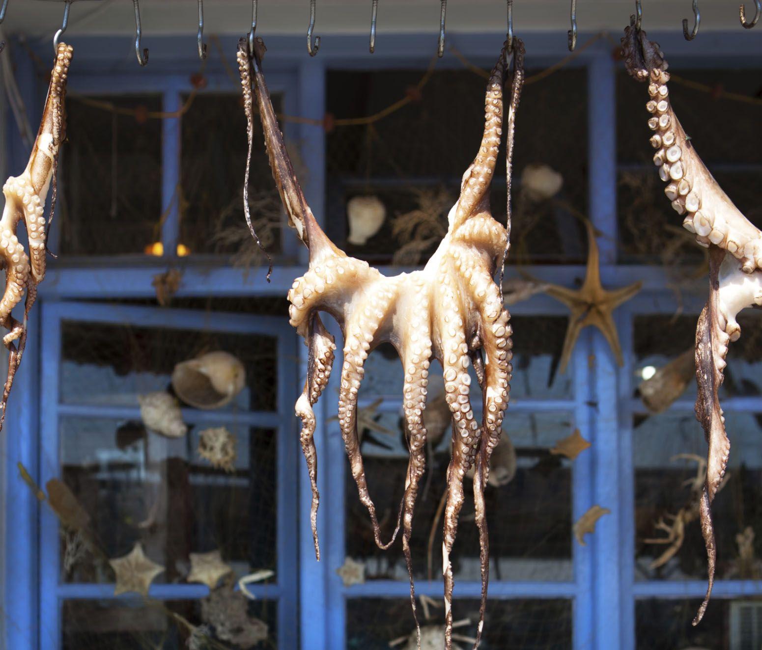"""Octopus on a string, greek restaurant"""
