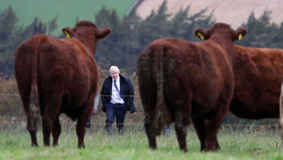 Premierminister Boris Johnson beim Besuch einer Farm bei Aberdeen, Schottland (2019): »Kauerndes, ängstliches Wesen«