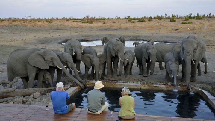 Safari-Camp im Simbabwe: Beste Aussichten