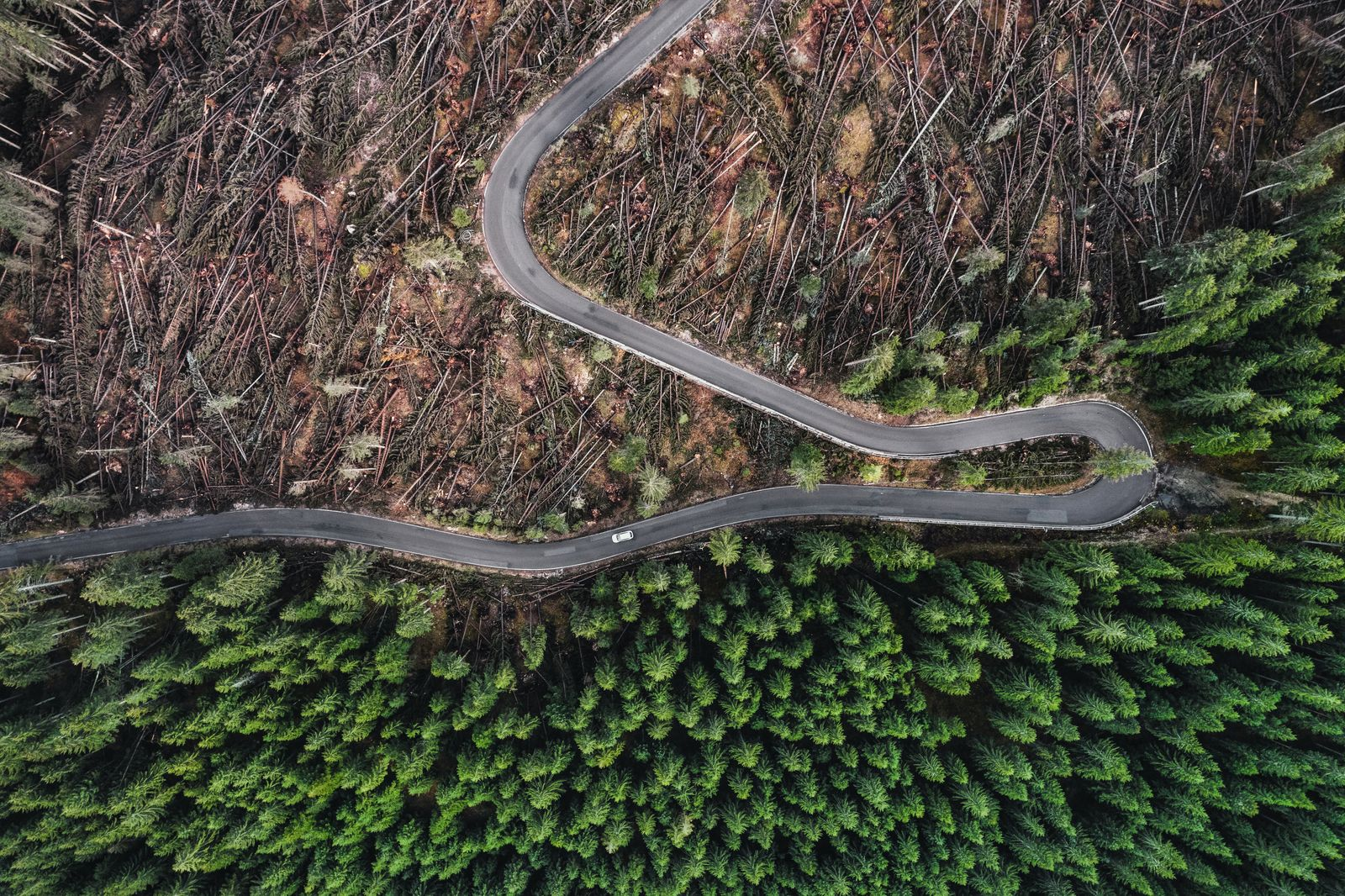 Incredible perspective showing destruction to a forest caused by a storm photographed by drone, Dolomites, Italy