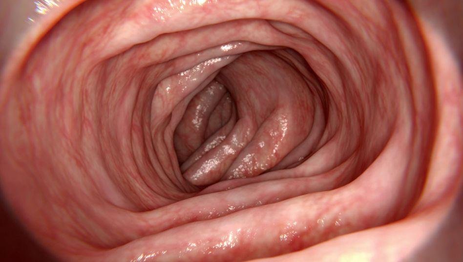 Illustration eines gesunden Darms