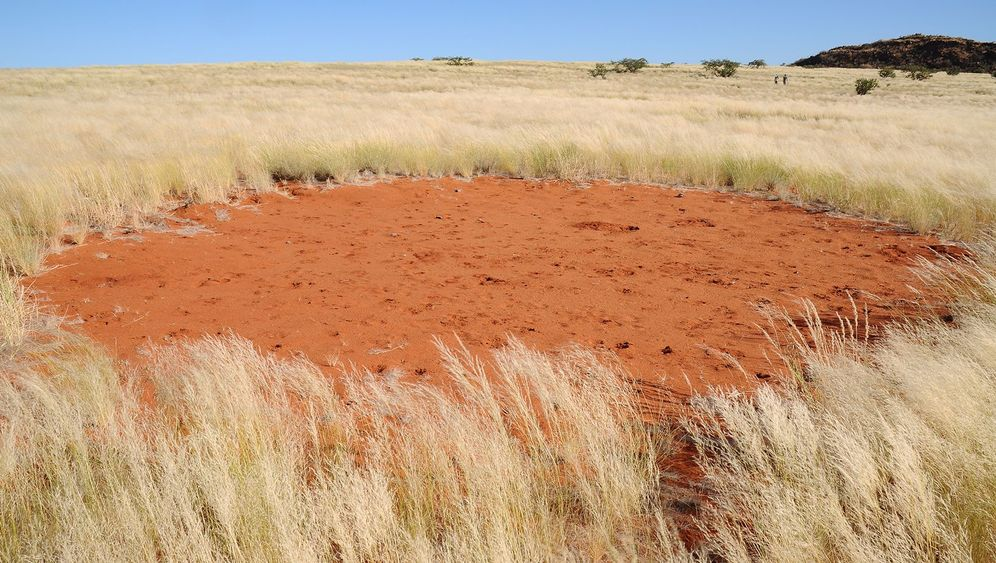 Sensationen der Savanne: Feenkreise in Südwestafrika