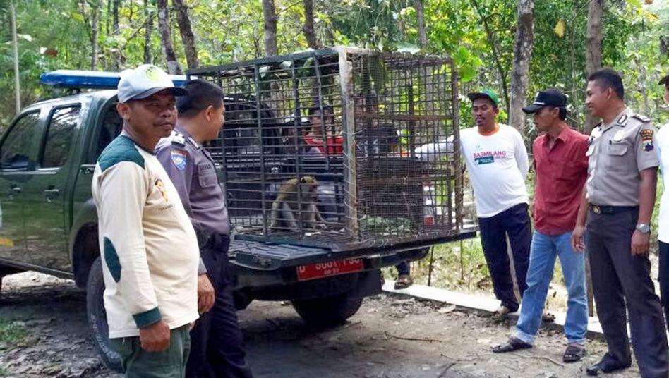 Waldarbeiter sperren Affen im indonesischen Boyolali ein (Archivbild)
