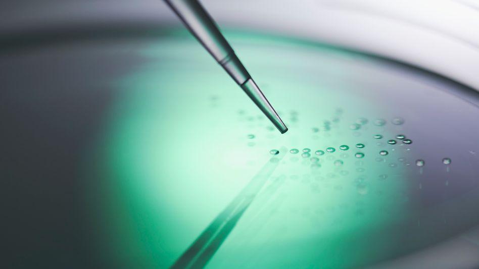Stammzellen in der Kulturschale: Umprogrammierte Zellen könnten umstrittene embryonale Stammzellen ersetzen