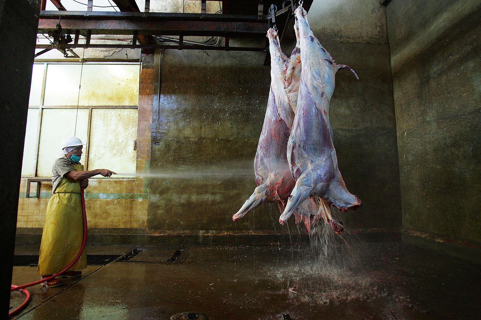 Pferde-Fleisch / Schlachter