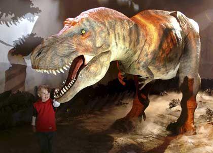 Modell eines Tyrannosaurus rex im Londoner Natural History Museum: Forscher finden Weichteile in Skelett