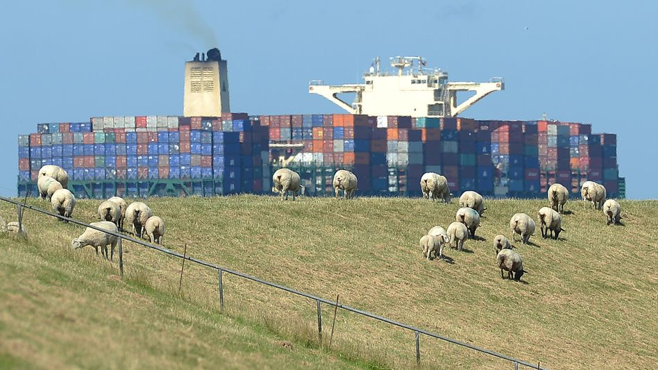 Sheep graze in a pasture along the Elbe River in Germany: Concern is growing over the trans-Atlantic free trade agreement.