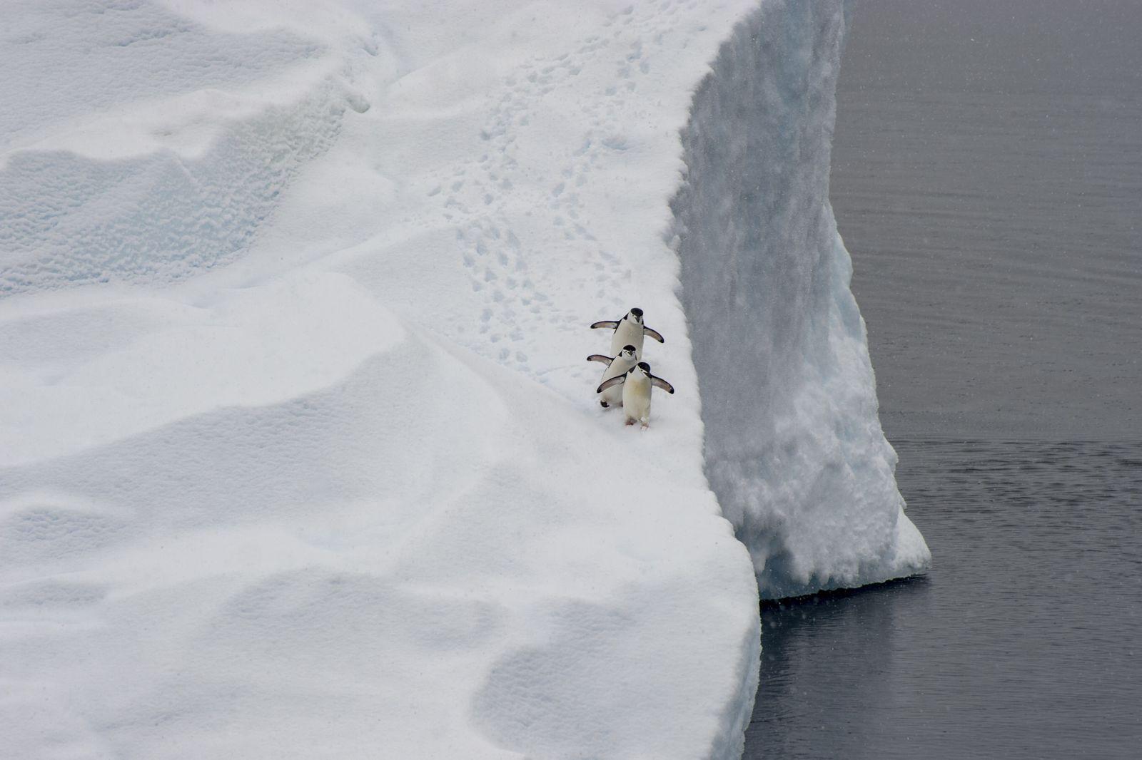 Antarctica, penguins, trio (George Theodore / DanitaDelimont.com)