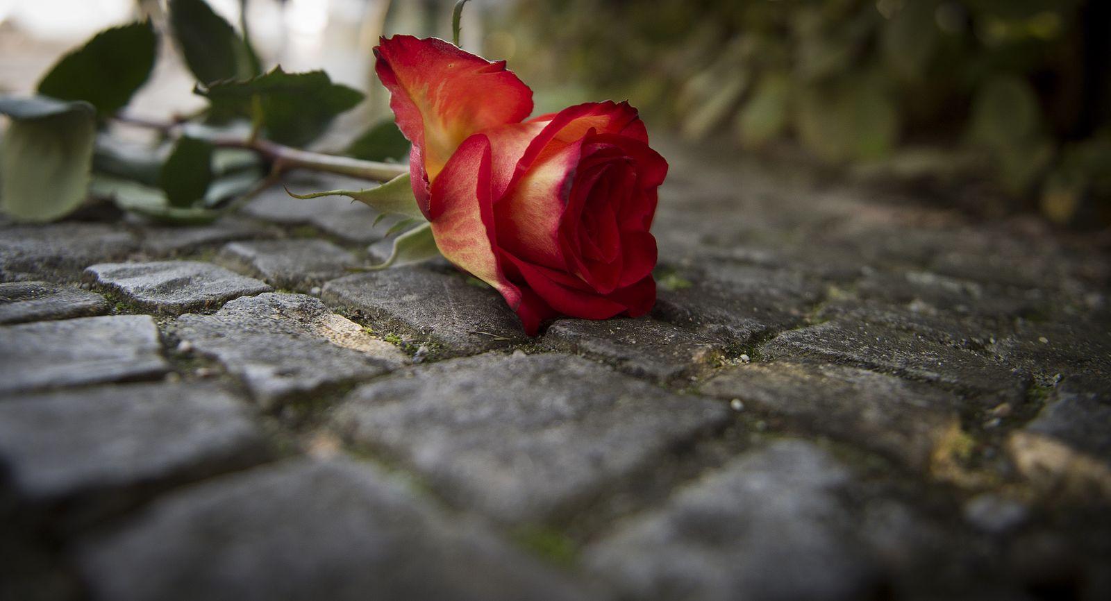 NICHT VERWENDEN Rose/ Dirk Bach