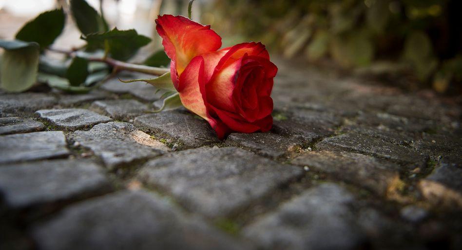 Abgelegte Rose vor dem Schlosspark Theater in Berlin: Trauer um Dirk Bach