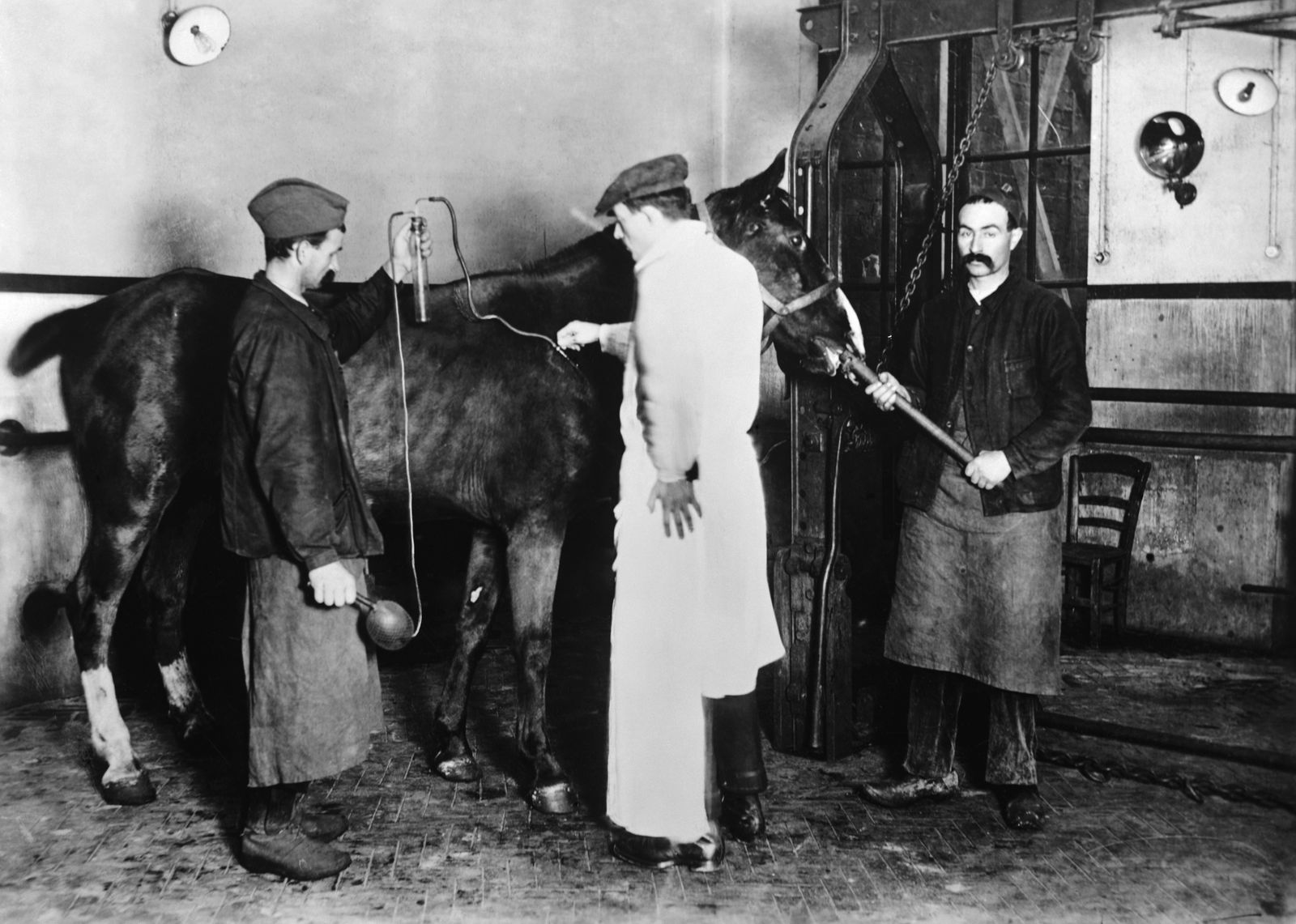 Men Inoculating Horse
