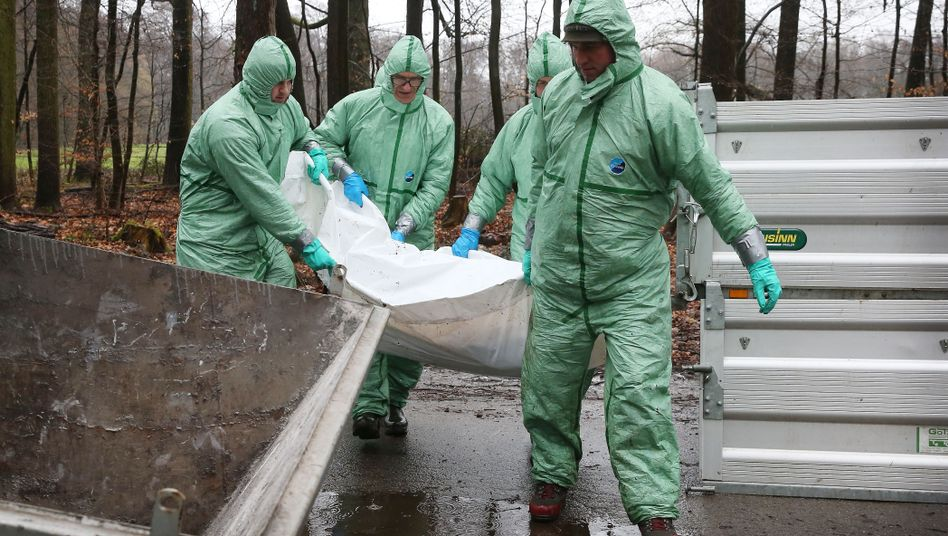 Männer in Schutzanzügen bei einer Übung zur Eindämmung der Schweinepest in Nordrhein-Westfalen: Die Krankheit wird über verunreinigte Gegenstände wie Werkzeuge, Schuhe oder Reifen weitergetragen