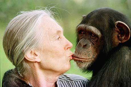 Jane Goodall mit der Schimpansendame Tess in einer Auffangstation in der Nähe von Nairobi