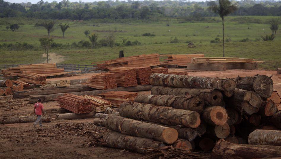 Gefällte Bäume im Amazonas-Wald (Archivbild): Zunehmende Abholzung