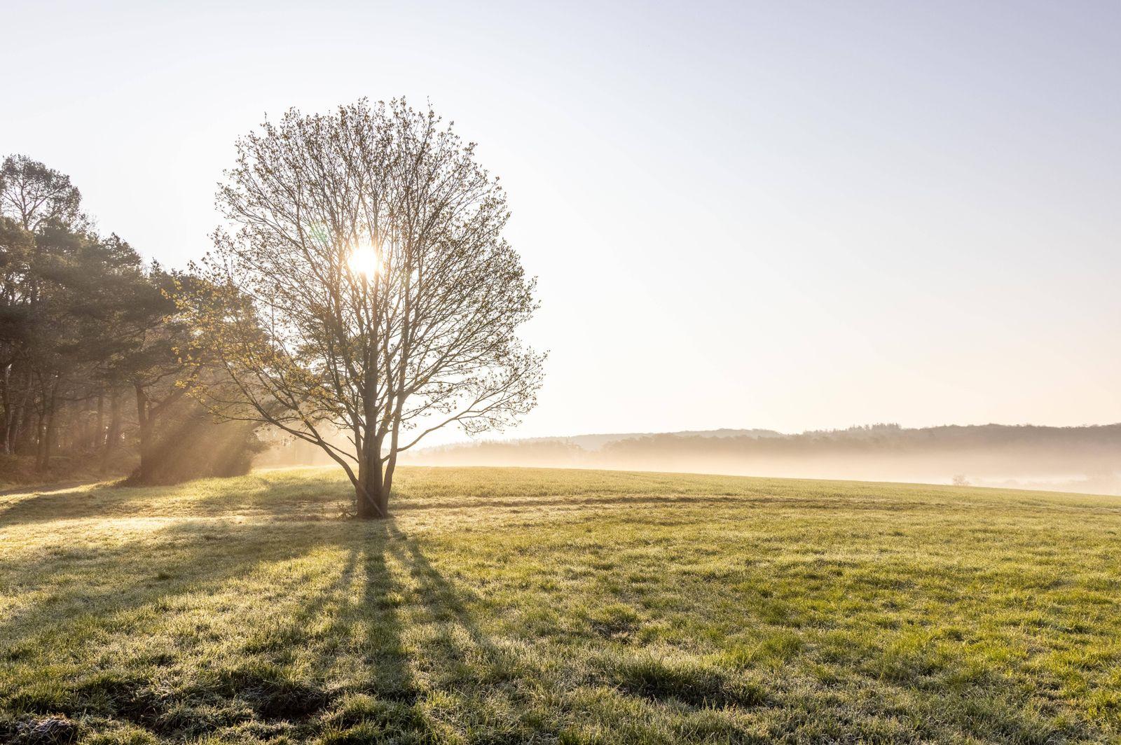 Sonniger Aprilmorgen 20.04.2021, Wehrheim (Hessen): Die Sonne scheint am Morgen bei letzten Nebelschwaden über den Bäume