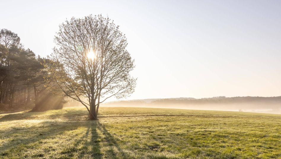 Sonnenaufgang im hessischen Wehrheim: Es wird warm – jedenfalls tagsüber
