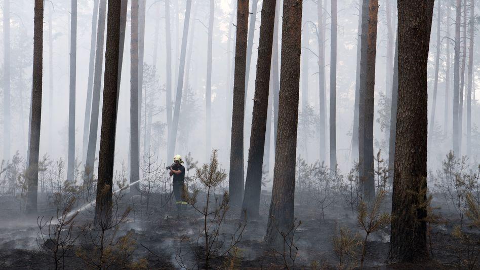 Ein Feuerwehrmann bekämpft einen Waldbrand bei Beelitz in Brandenburg (Archivbild).