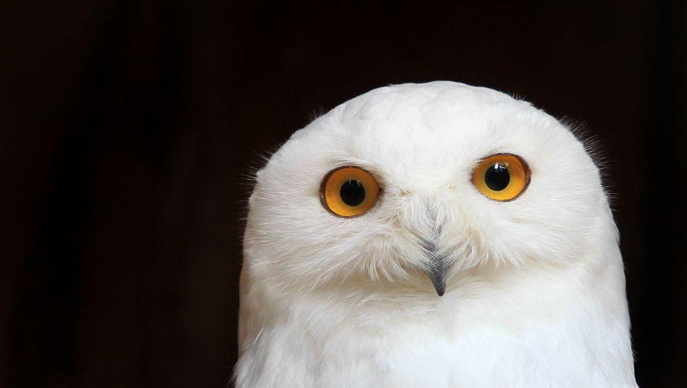 Rote Liste: Viele Vogelarten in der EU bedroht