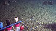Umweltschützer warnen vor Zugriff von Konzernen auf die Tiefsee