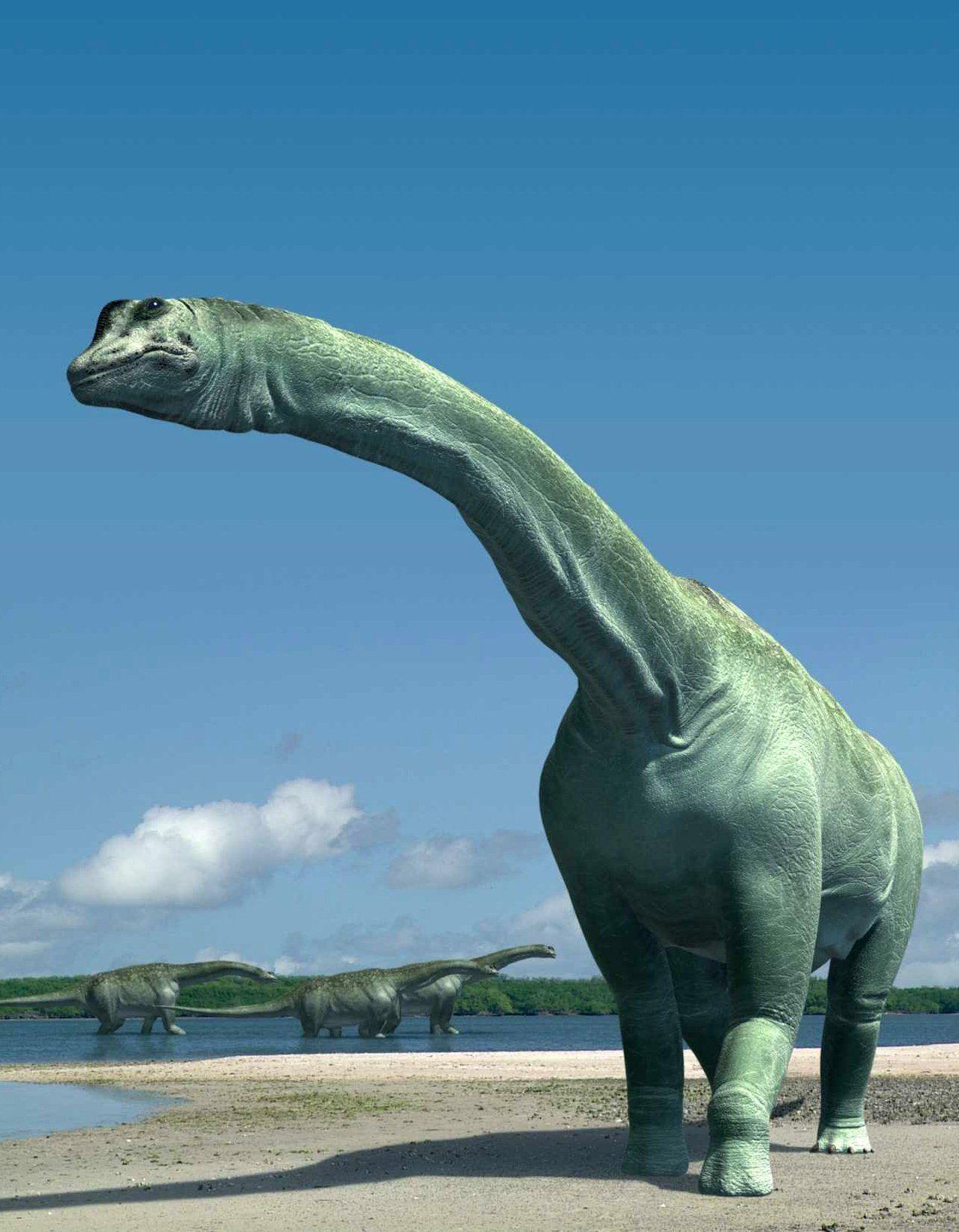 EINMALIGE VERWENDUNG Sauropoden / Paralititan stromeri