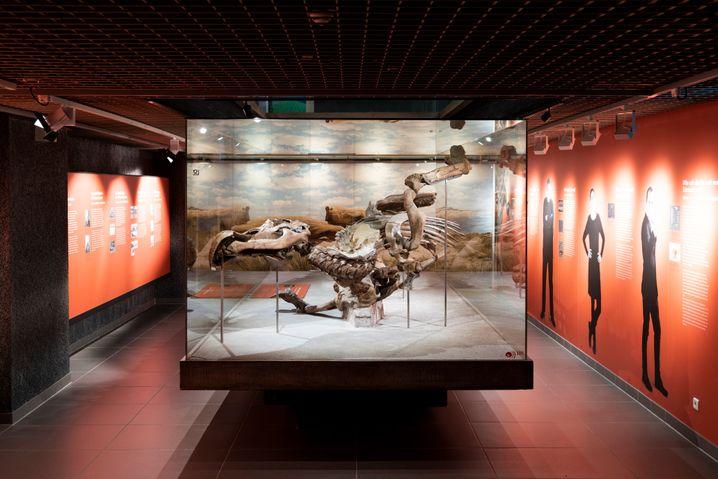 Der Edmontosaurus ist schon seit beinahe hundert Jahren am Senckenberg-Museum in Frankfurt zu bestaunen