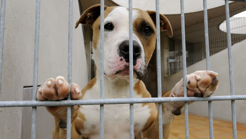 Sad at a Berlin animal refuge: The global financial crisis is affecting Germany's pets too.