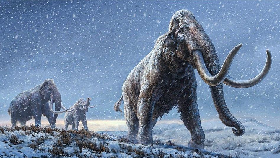 Steppenmammut (Illustration): »Am Anfang dachten wir, diese Untersuchung ist eine dumme Idee«