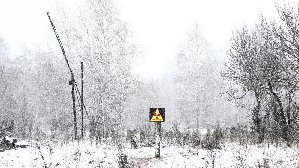 Tschernobyl: Tierfotos aus der Todeszone