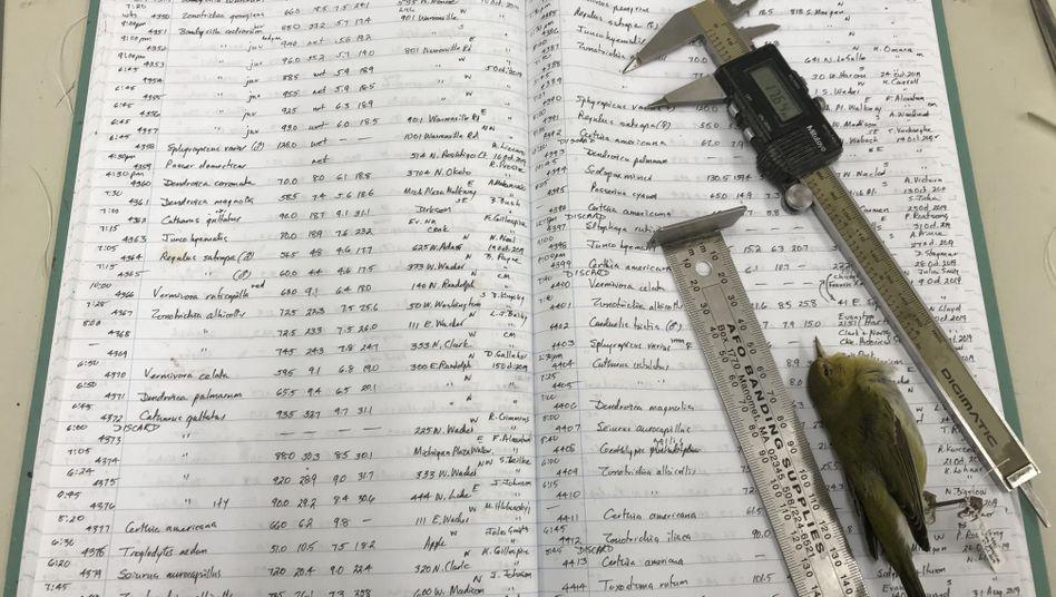 Das Logbuch von Forscher Dave Willard, seine Vermessungsinstrumente und ein toter Singvogel, ein Tennessee Warbler (Brauen-Waldsänger)