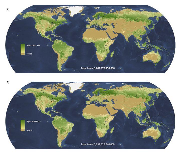 Baumdichte: Hohe Werte in Tropen und subarktischen Regionen