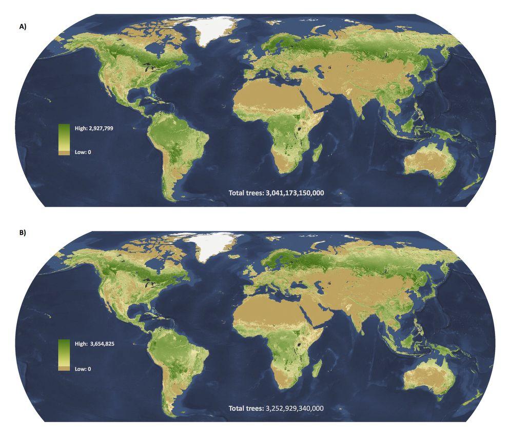 EINMALIGE VERWENDUNG Weltkarte/ Bäume